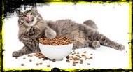 Macska eledel