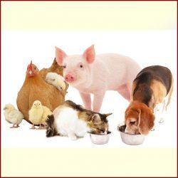 Állateledel - állatfelszerelés